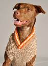 Oxford Dog Sweater